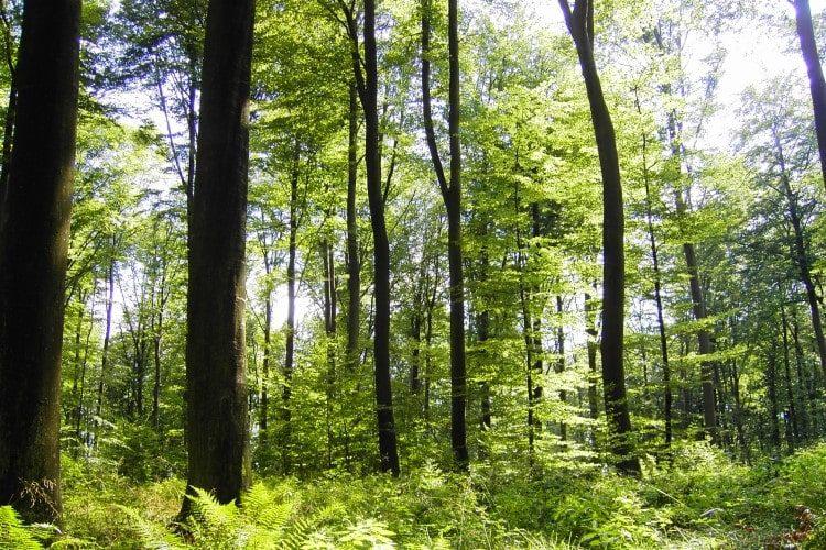 Lichtdurchfluteter Wald im Frühling