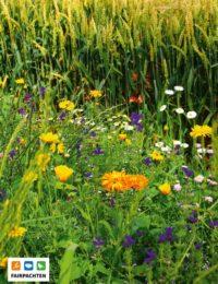 Blühwiese mit vielen bunte Blumen vor einem Kornfeld