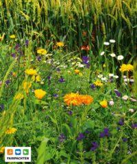 bunte Blühwiese vor einem strahlend gelben Kornfeld