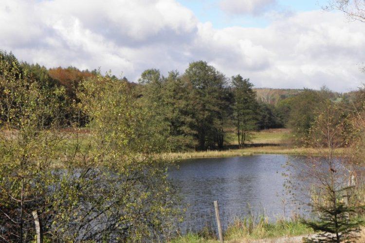 Robener See - Biotop der Stiftung Schönau