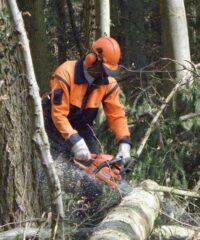 Forstwirt bei der Arbeit