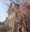 Das Gebäude der Stiftung Schönau in der Zähringer Str. in Heidelberg. Davor blüht ein Magnolienbaum im Frühjahr.